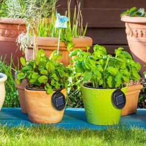 Lampe solaire pour plante intérieur